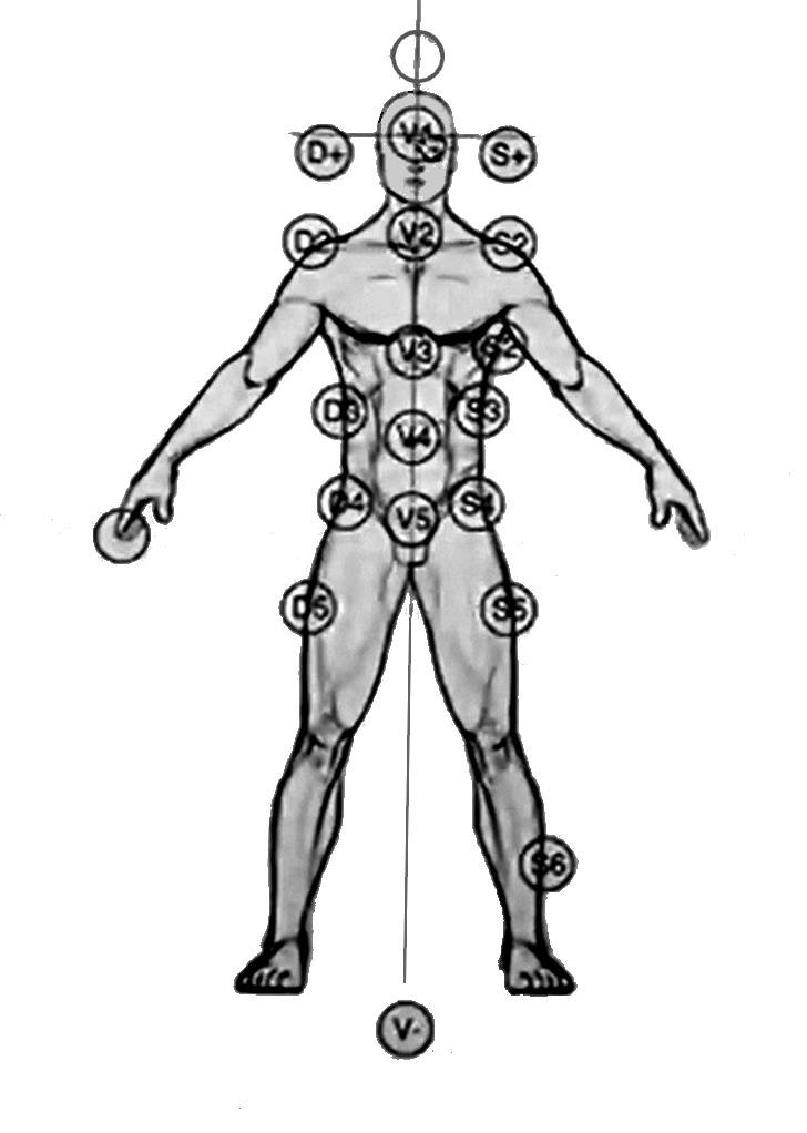 Пуп (пупок) человека | анатомия пупка, строение, функции, картинки на eurolab