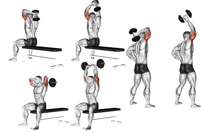 Как накачать трицепс в домашних условиях: упражнения с гантелями и без для эффективной тренировки по прокачке мышц для мужчин, девушек и женщин дома правильно