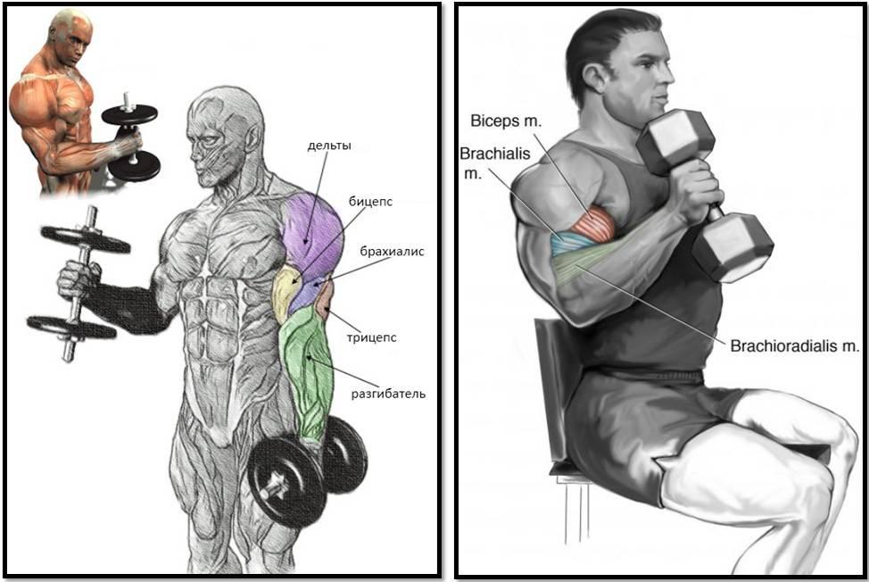 2 основных упражнения для тренировки брахиалиса.