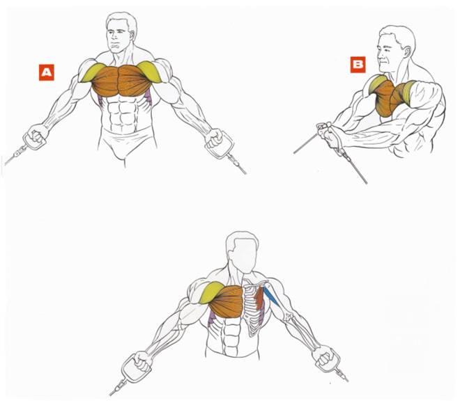 Как накачать мышцы в домашних условиях. лучшие советы!
