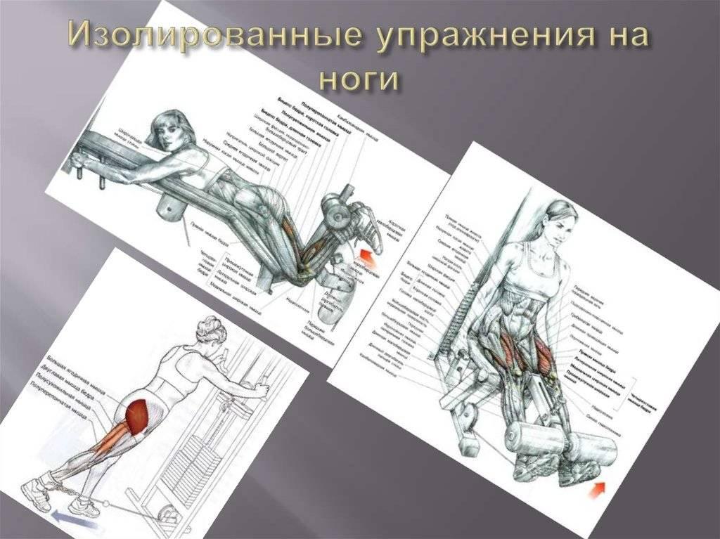 Изолирующие упражнения: отличия от базовых, список по группам мышц