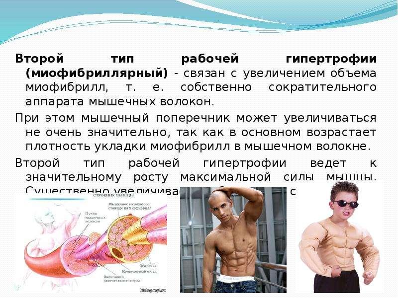 Аэробные тренировки мешают гипертрофировать мышцы | fpa