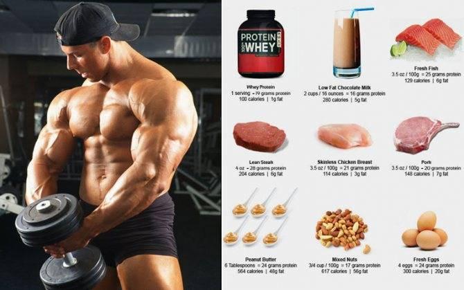 За сколько можно накачаться в тренажерном зале | musclefit