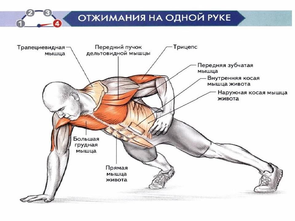 Как правильно отжиматься от пола мужчинам: техника выполнения отжиманий с нуля, чтобы накачать грудные мышцы и трицепсы