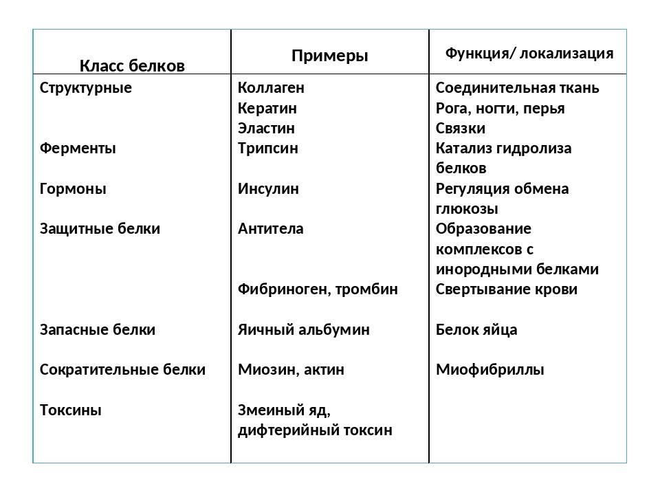 "Таблица ""функции белков"""