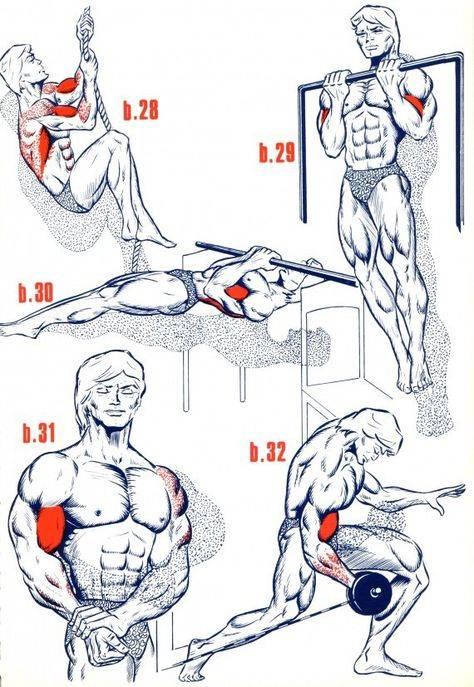 Как накачать бицепс - правильное руководство по увеличению популярной мышцы