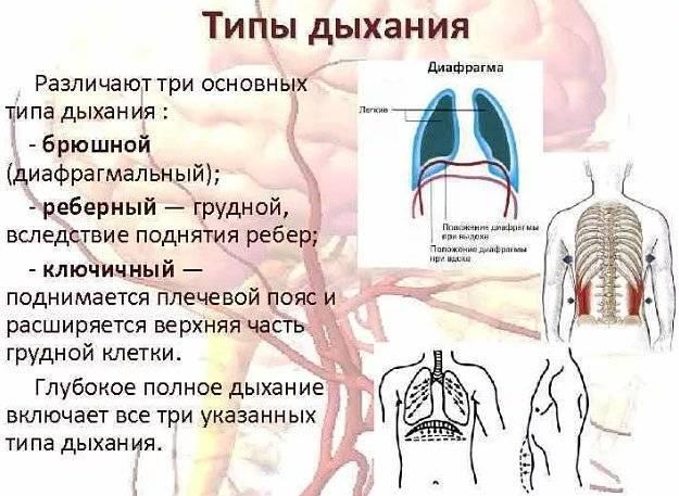 Правильное дыхание животом: техника диафрагмального дыхания