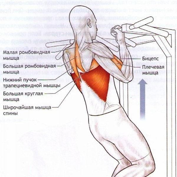 Помощь при боли верхней части трапециевидной мышцы