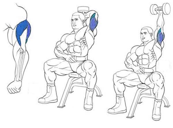 Как накачать плечи дома и зале: топ-15 упражнений