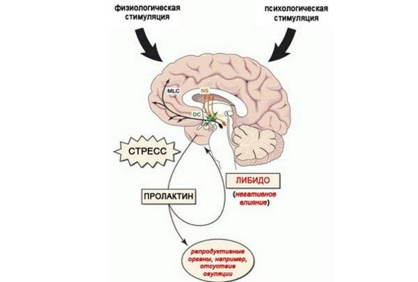 Повышенный пролактин и овуляция: причина бесплодия, которую легко выявить