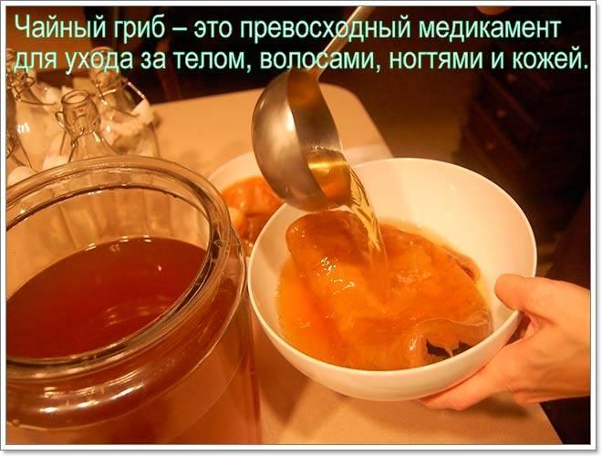 Чайный гриб, уход за ним, инструкция по применению, употреблению и размножению