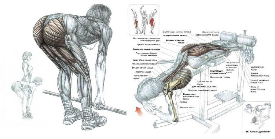 Лучшие упражнения для ягодиц - на разные группы мышц