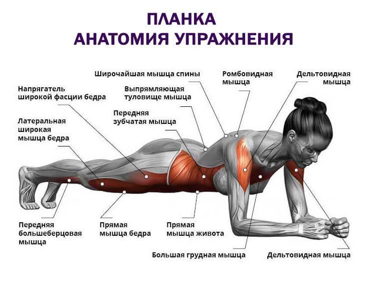 Обратная планка: как правильно делать, польза упражнения