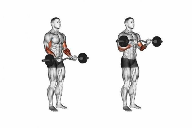 Упражнения с гирями в домашних условиях: тренировка на все группы мышц, комплекс для начинающих