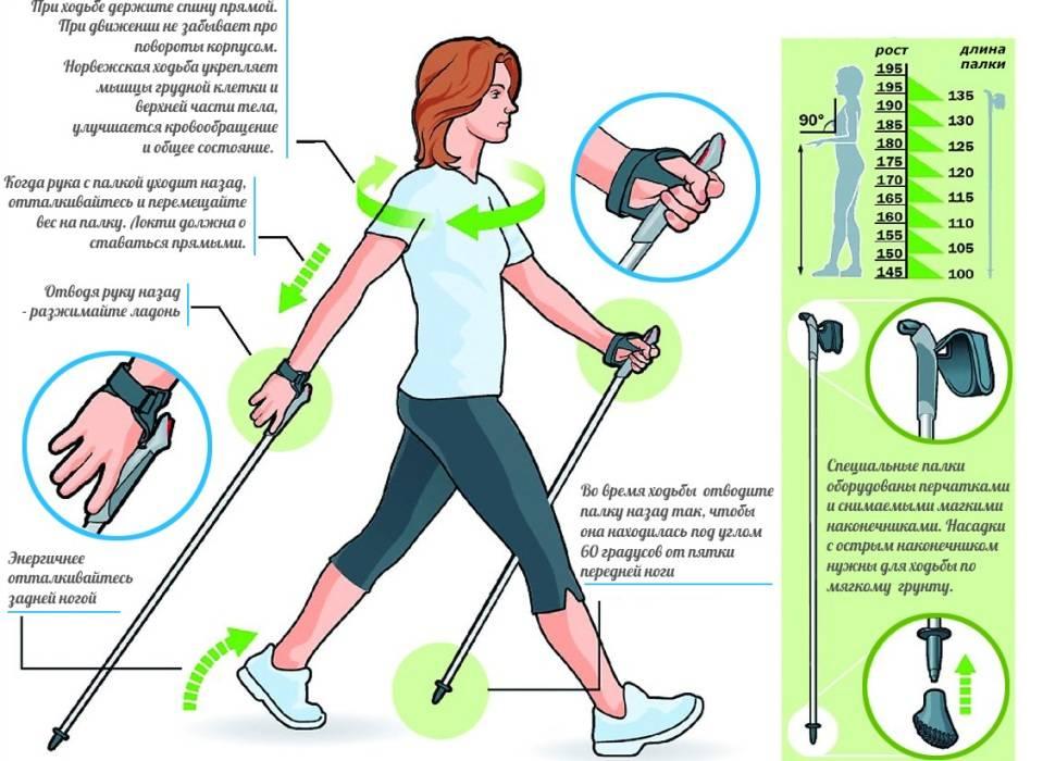 Скандинавский оздоровительный спорт: инструкции для начинающих