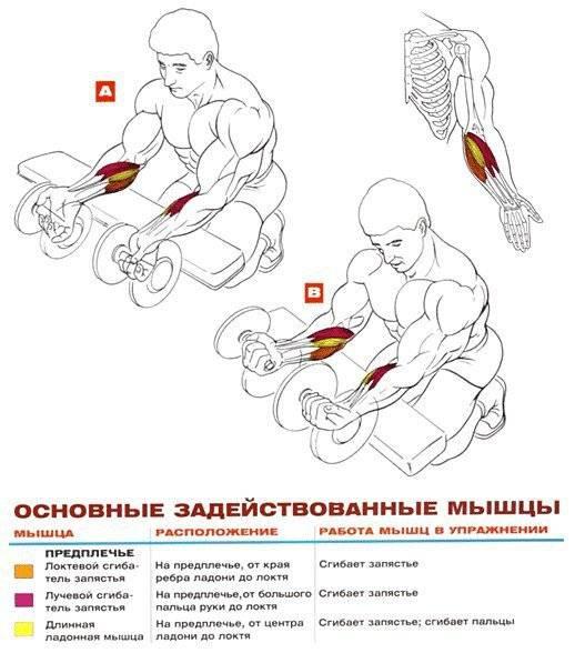 Как накачать руки и пресс: 15 мощных упражнений в домашних условиях