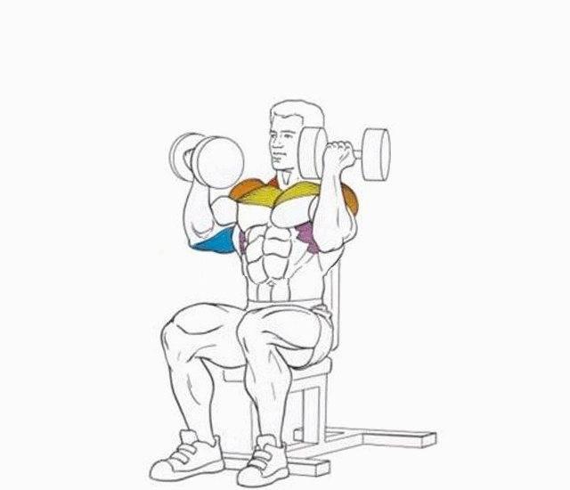 """Обзор упражнения """"жим гантелей сидя"""": правильная техника выполнения, ошибки, советы и факты"""