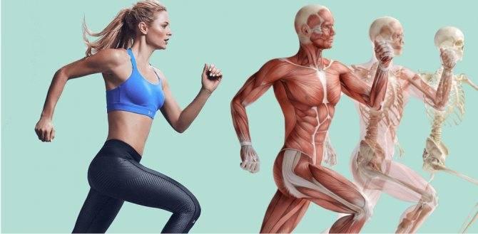 Важность типа телосложения в бодибилдинге