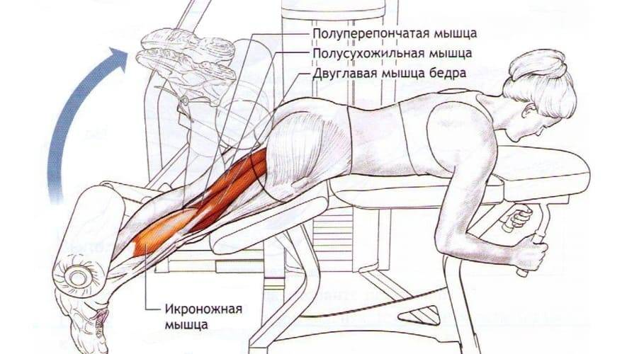 Рекомендации по выполнению сгибаний ног в тренажере лежа, сидя и стоя