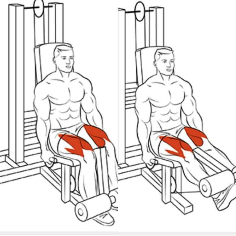 Как делать разгибание ног на тренажере сидя? какие мышцы работают в упражнении?