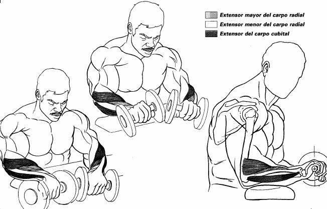 Как накачать мощные предплечья – упражнения со штангой и гантелями