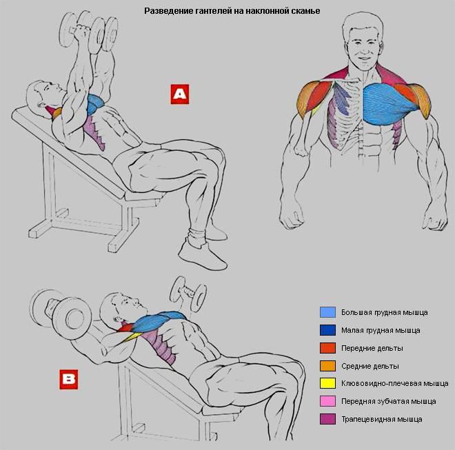 Топ-4 базовых упражнения на мышцы груди в тренажерном зале и дома