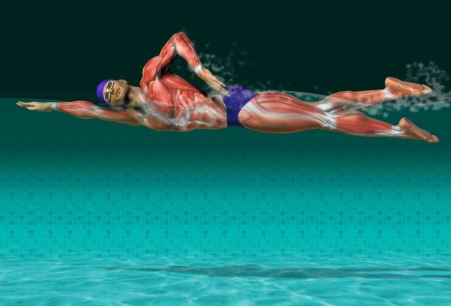 Польза плавания: 11 фактов которые всем нужно знать!