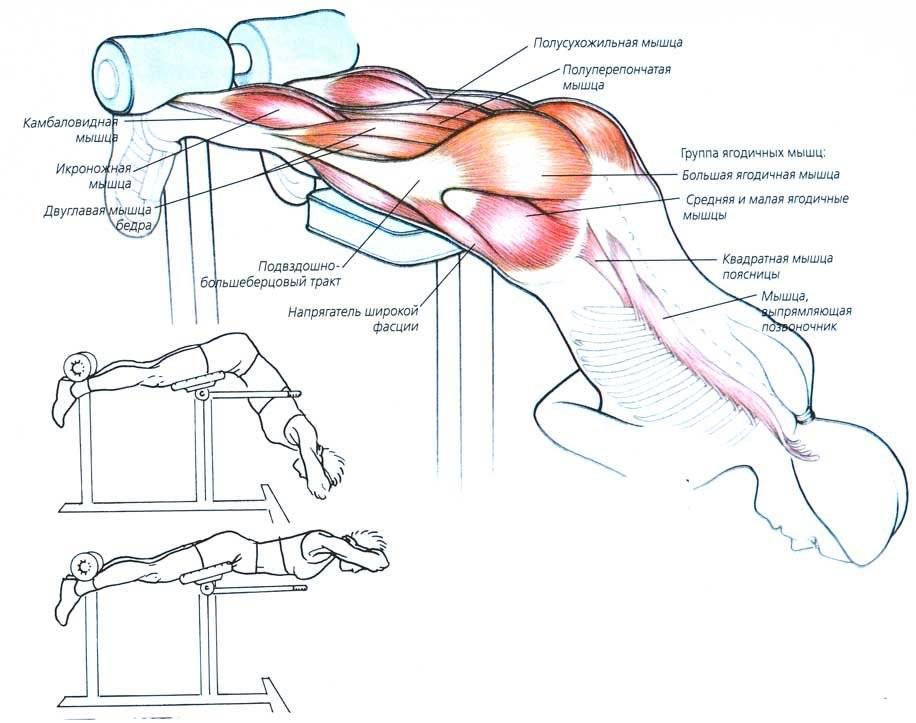 Гиперэкстензия: работающие мышцы и техника выполнения