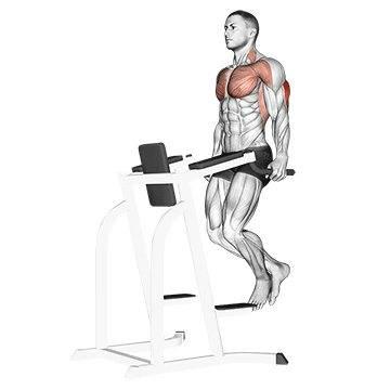 Какие мышцы работают при отжиманиях на брусьях, как быстро можно накачать грудь и трицепсы