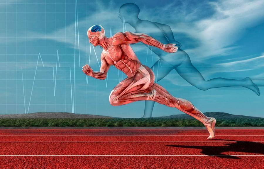 Пампинг мышц — что это такое