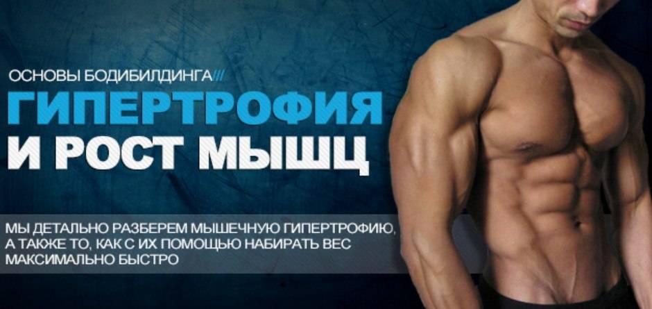 Мышечная гипертрофия: теория и практика | спортнаука