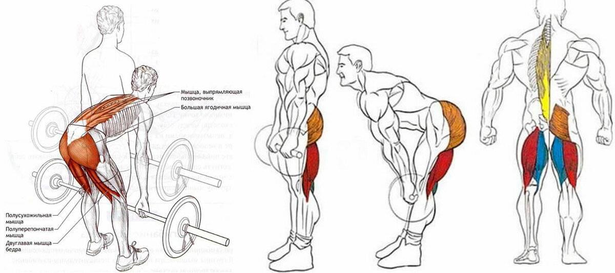 Все виды становой тяги: техника выполнения, разбор ошибок, как правильно делать такое упражнение