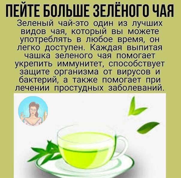 Зеленый чай — польза и вред для организма мужчины и женщины. полезные свойства и противопоказания
