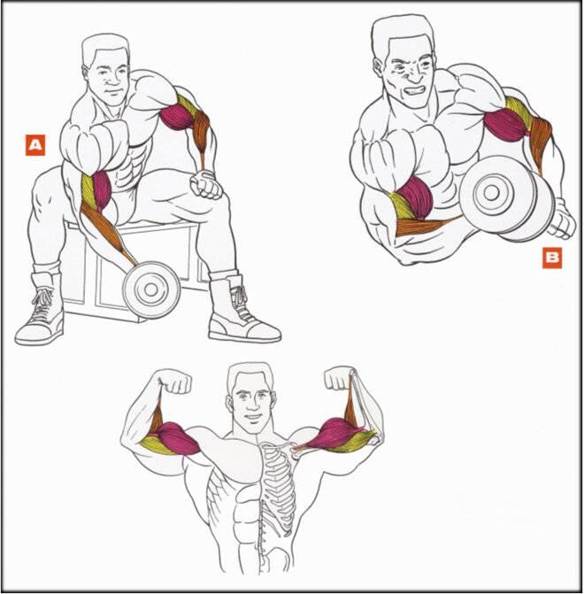 Как накачать запястья рук: мифы, упражнения и лучшие тренировки