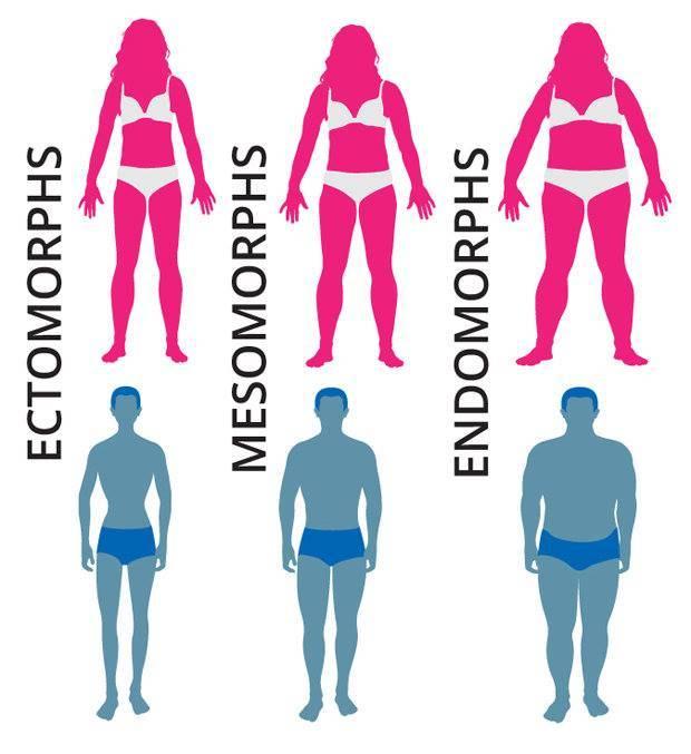Мезоморф – рекомендации для атлетического типа телосложения