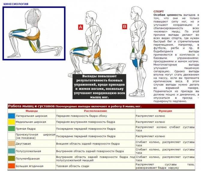 Приседания с гантелями: техника выполнения, какие мышцы работают