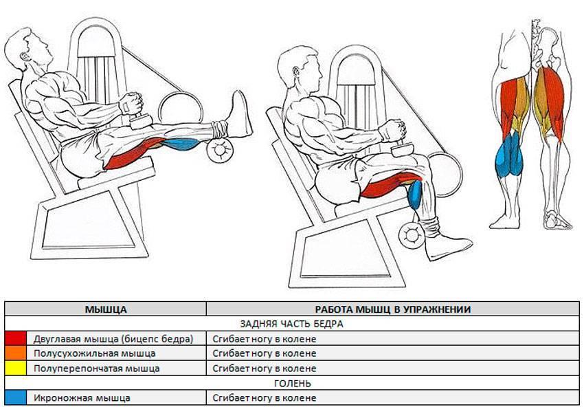 Сгибание и разгибание ног в тренажере: назначение упражнения, техника выполнения