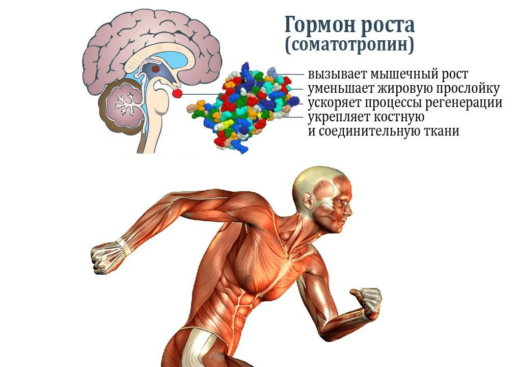 Гормоны и фитнес: 7 вопросов тренеру об эндокринной системе