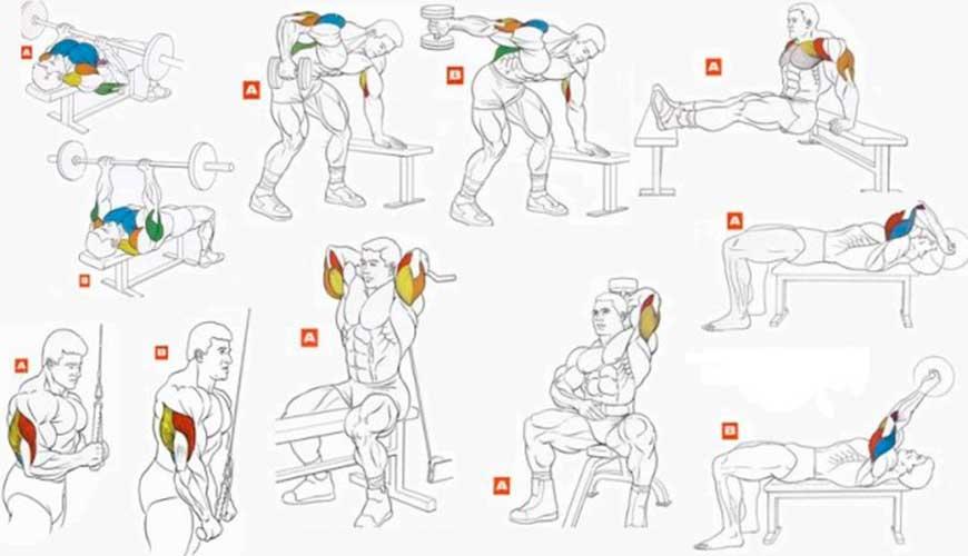 Как накачать руки: теория, упражнения для новичков и любителей как накачать руки: теория, упражнения для новичков и любителей