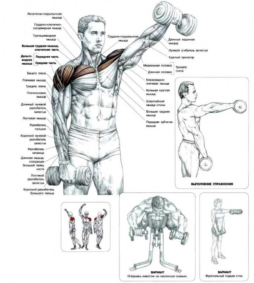 Тренировка плеч дома . топ эффеткивных упражнений