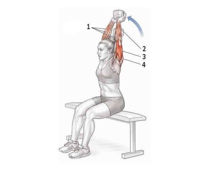 Жим гантелей сидя: изучаем нюансы техники, прокачиваем дельты жимом гантелей над головой