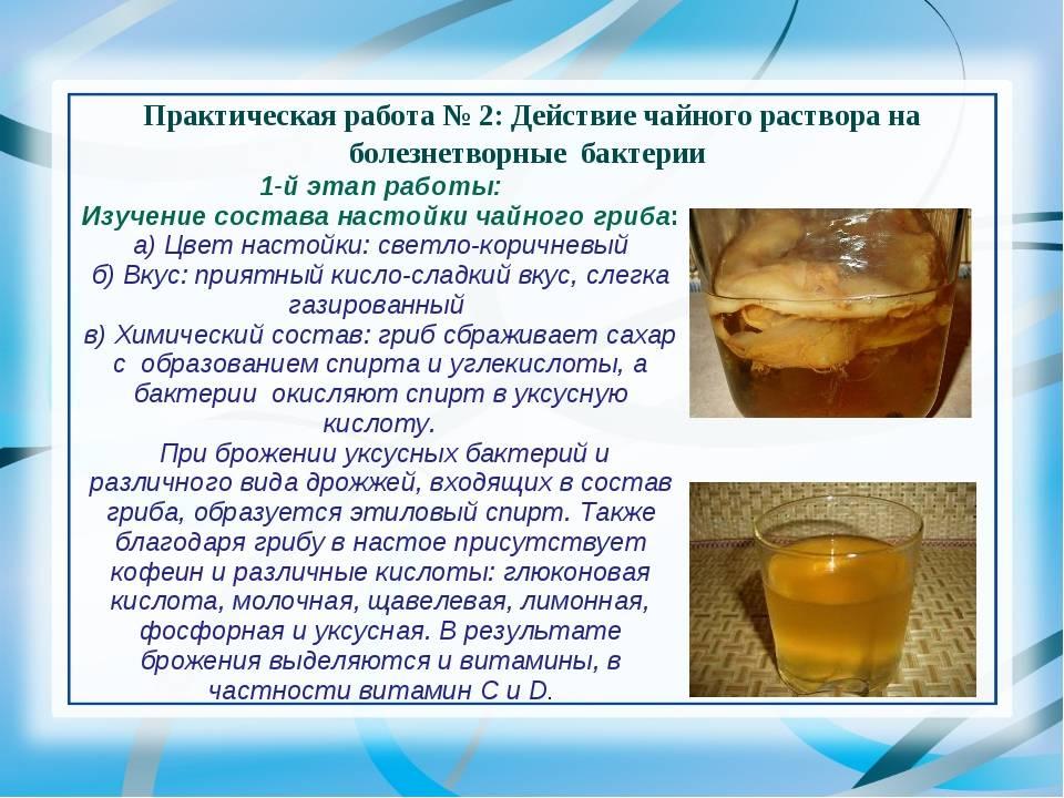 Чайный гриб. лечебные свойства