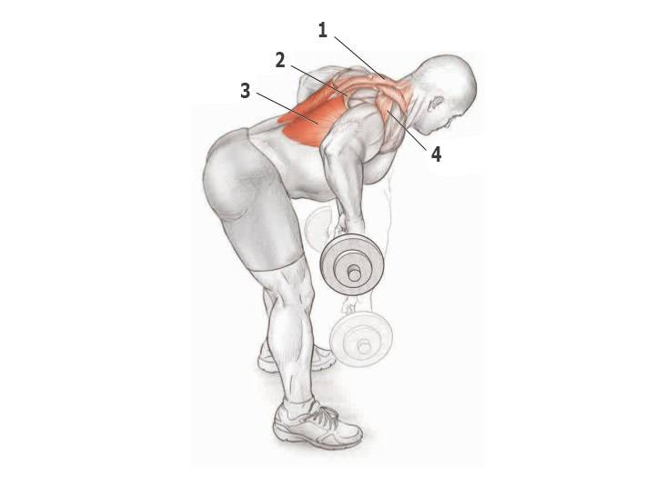 Тренируем задние дельты и трапеции со штангой или гантелями: разбор тяги ли хейни