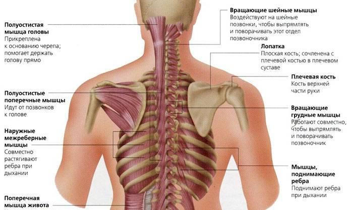 О чем говорит боль в спине в области лопаток?