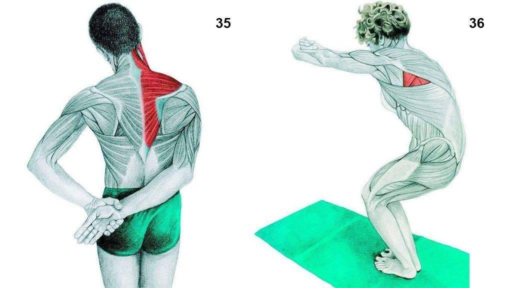 Упражнения для растяжки спины и позвоночника в домашних условиях для начинающих