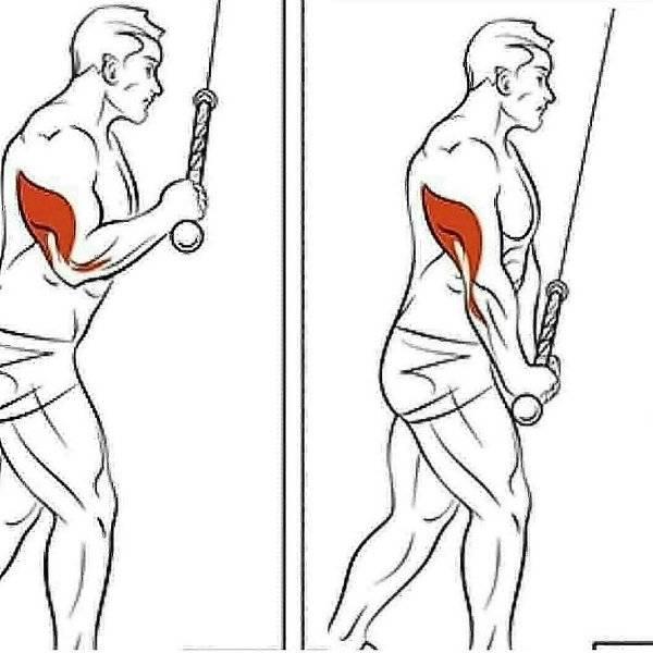 Как накачать руки: лучшие упражнения на трицепс