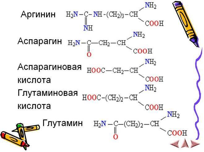D-аспарагиновая кислота [lifebio.wiki]