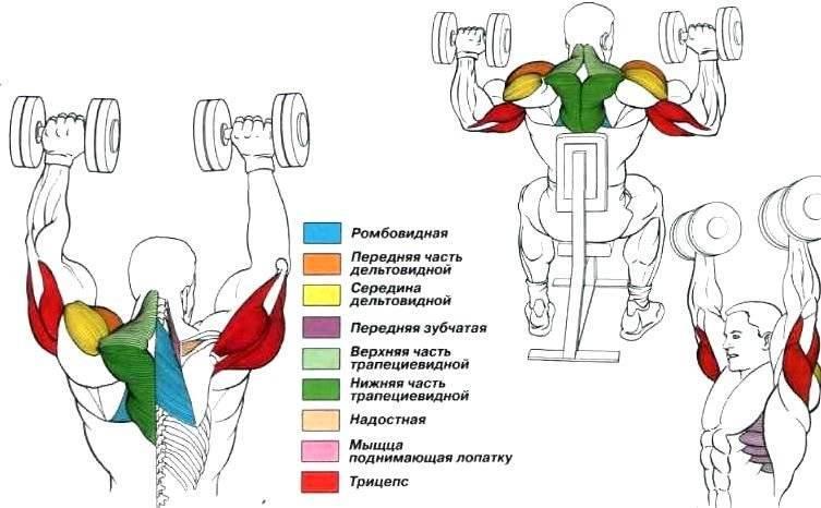 Жим тейта: техника выполнения с гантелями, какие мышцы работают