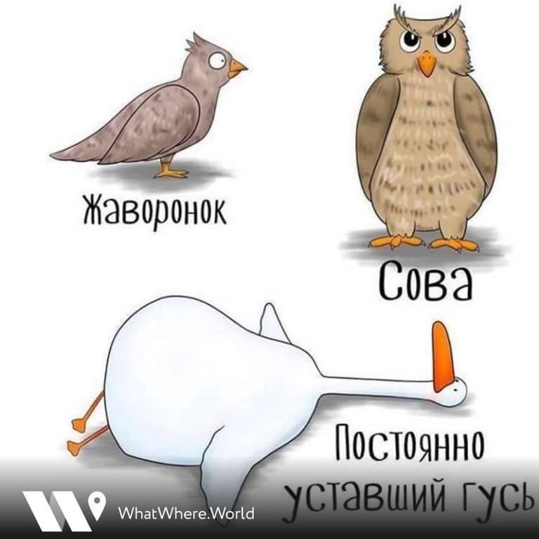 Как рано просыпаться? из совы в жаворонки за один день | kucher's life