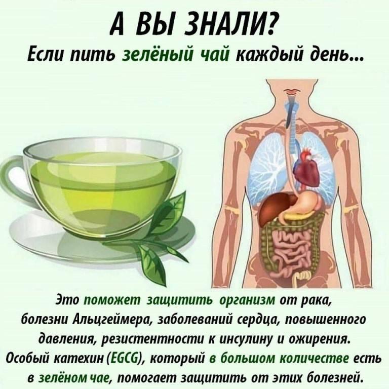 Экстракт зелёного чая защищает от рака и продлевает жизнь
